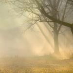 Pierwsze promienie słońca w lasach Puszczy Białowieskiej